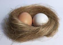 Eier im Nest Stockbild