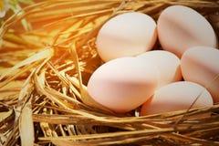 Eier im Nest auf der Natur oder dem Bauernhof, frische Eier für das Kochen und Material im Küchenraum, neuer Eihintergrund für Le Stockbilder