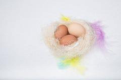 Eier im Nest mit Federn und verziert Stockfotos