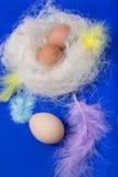 Eier im Nest mit Federn und verziert Stockfoto