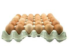 Eier im Papiertellersegment getrennt auf weißem Hintergrund Lizenzfreies Stockbild