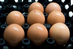 Eier im schwarzen Behälter Stockbild