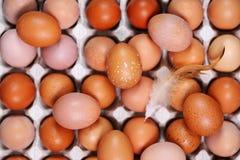 Eier im Tellersegment, Draufsicht Stockfotografie