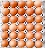 Eier kartonieren, Eier in einem Kasten Lizenzfreies Stockfoto