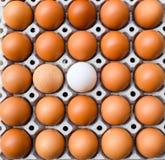 Eier kartonieren mit Entenei, Eier in einem Kasten, Eiunterschiedkonzept Lizenzfreie Stockfotografie