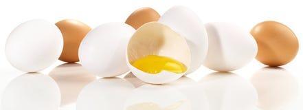 Eier - Panorama auf weißem Hintergrund stockbild