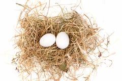 Eier sind im Nest Lizenzfreie Stockfotografie