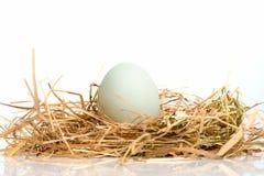 Eier sind im Nest Lizenzfreie Stockbilder