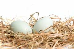 Eier sind im Nest Stockfotos