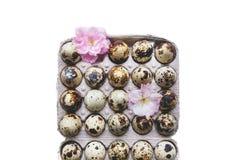 Eier und Bl?te im Kasten lizenzfreies stockbild