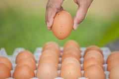 Eier und Ei in der Hand Lizenzfreie Stockfotos
