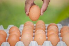 Eier und Ei in der Hand Stockbilder