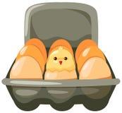 Eier und Huhn im Karton Stockbilder