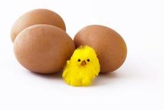 Eier und Küken Lizenzfreies Stockfoto