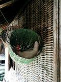 Eier ungefähr zu kommen stockbild