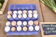 Eier von der Strecke geben Hühner frei Stockbild