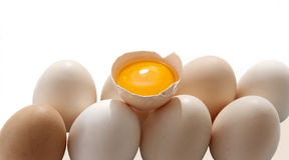 Eierdooier en eieren Stock Foto