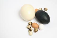 Eieren Stock Fotografie
