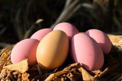 Eieren Stock Afbeelding