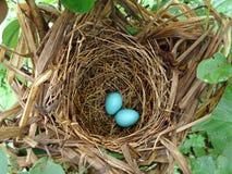 Eieren stock foto