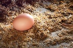 Eieren bij nest in kippenlandbouwbedrijf Stock Afbeelding