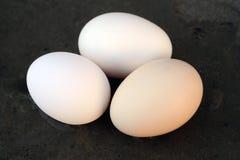 Eieren in de handen van landbouwers van witte kippen Royalty-vrije Stock Afbeeldingen