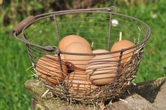 Eieren in de mand Royalty-vrije Stock Foto
