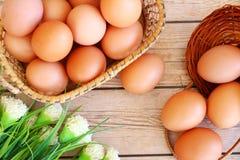 Eieren in de mand Stock Fotografie