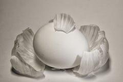 Eieren in de schil Stock Foto's