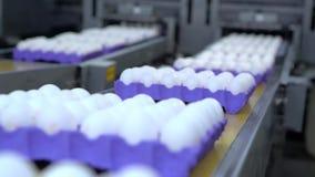Eieren die door de productielijn overgaan Langzame Motie stock videobeelden