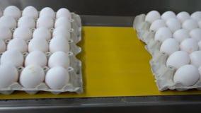 Eieren die door de productielijn overgaan Langzame Motie stock video