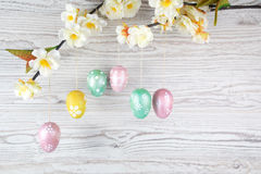 Eieren die op een tak hangen Royalty-vrije Stock Afbeelding