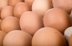 Eieren in document dienblad Stock Afbeeldingen