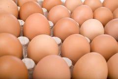 Eieren in document dienblad Royalty-vrije Stock Fotografie