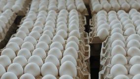 Eieren in een kartondoos van kippenlandbouwbedrijf stock video