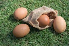 Eieren in een kleine jutezakken Stock Foto's