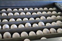 Eieren in een lopende bandverpakking Stock Foto's