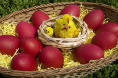Eieren in een mand Stock Afbeeldingen