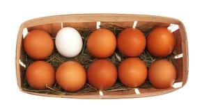 Eieren in een mand Stock Foto's