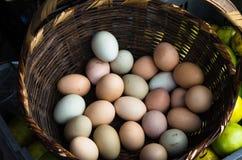 Eieren in een mand Stock Fotografie