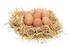 Eieren in een nest Stock Foto's