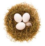 Eieren in een nest Royalty-vrije Stock Afbeeldingen