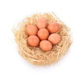 Eieren in een nest op witte achtergrond Royalty-vrije Stock Foto