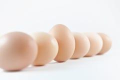 Eieren in een rij Stock Foto
