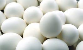 Eieren en eieren Stock Afbeelding
