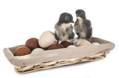 Eieren en kuikens royalty-vrije stock foto's