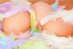 Eieren en pennen Royalty-vrije Stock Fotografie