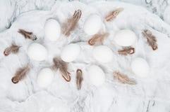 Eieren en veren Royalty-vrije Stock Afbeelding