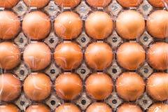 Eieren in gevoerde dienbladen Stock Afbeeldingen