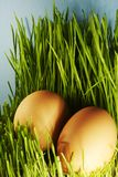 Eieren in gras Royalty-vrije Stock Foto